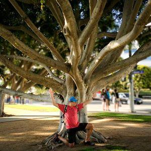 Kelmer Tree